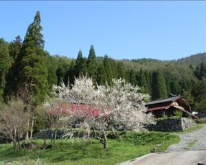 Horakuan in spring_small